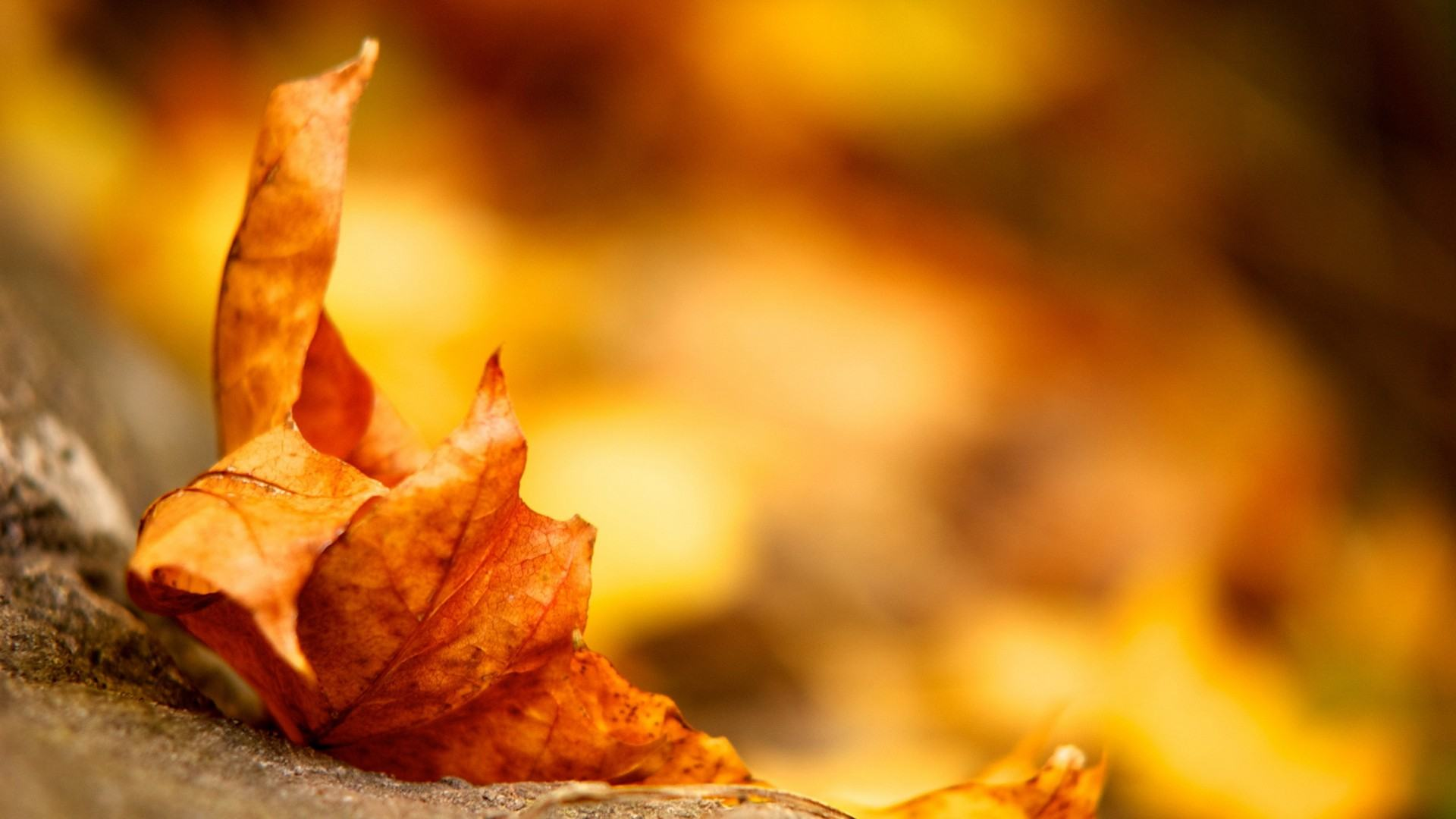 fall autumn season wallpaper nature background lifechurch